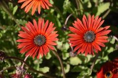 Flor para arriba 4 cercanos Imagen de archivo