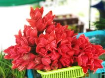 A flor para come Fotos de Stock Royalty Free