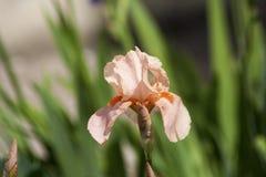 Flor para el amor Imagenes de archivo