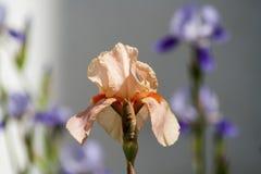 Flor para el amor Fotos de archivo libres de regalías