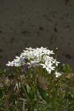 Flor para el amor imagen de archivo