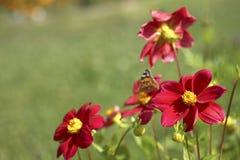Flor para el jardín Fotos de archivo libres de regalías