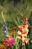Flor para el jardín Imágenes de archivo libres de regalías