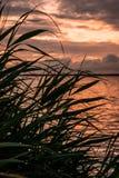 Flor para el sol Foto de archivo libre de regalías