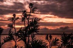 Flor para el sol Imagen de archivo libre de regalías