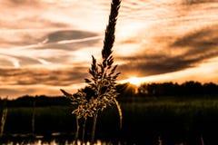 Flor para el sol Foto de archivo