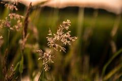 Flor para el sol Fotos de archivo
