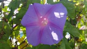 Flor para la vida Fotografía de archivo libre de regalías