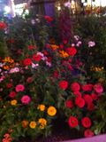 flor para mim Foto de Stock