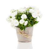 Flor para o presente no empacotamento de papel Fotografia de Stock