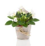 Flor para o presente no empacotamento de papel Foto de Stock