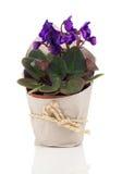 Flor para o presente no empacotamento de papel Imagem de Stock Royalty Free