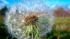 Flor para que u sea Imagenes de archivo