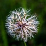 Flor para sembrar 1 Foto de archivo libre de regalías
