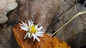Flor pasada de la estación imagen de archivo libre de regalías