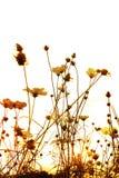Flor pasada de moda imagen de archivo libre de regalías