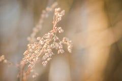 Flor pastel da mola Foto de Stock