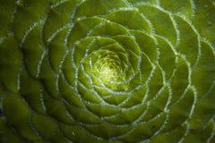 Flor. Patron concentrico de planta color verde Royalty Free Stock Photo
