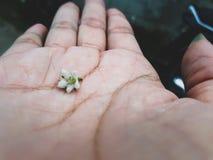 Flor pequeña fotografía de archivo libre de regalías