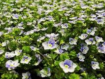 Flor pequena Imagem de Stock