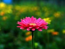 Flor pequena Foto de Stock Royalty Free