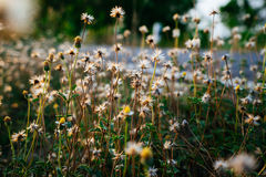 Flor pequena Fotos de Stock Royalty Free