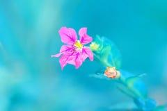 Flor pequena colorida vermelho Foto de Stock
