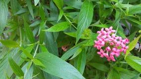 Flor pequena cor-de-rosa no lado direito da foto Fotos de Stock