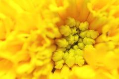 Flor pequena da flor Imagem de Stock Royalty Free