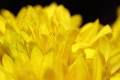 Flor pequena da flor Fotografia de Stock