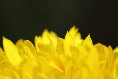 Flor pequena da flor Imagem de Stock