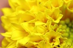 Flor pequena da flor Foto de Stock