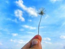 Flor pequena da grama no céu Fotografia de Stock