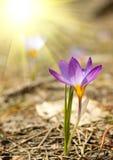 Flor pequena da mola Imagem de Stock Royalty Free