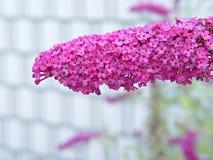 Flor pequena do grupo cor-de-rosa Imagens de Stock
