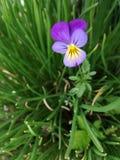 Flor pequena no fundo da grama verde imagens de stock royalty free