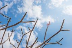 Flor pequena no ramo com céu do dia Imagens de Stock Royalty Free