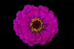 Flor perenne Imagen de archivo libre de regalías
