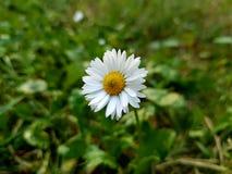 Flor perfecta Foto de archivo libre de regalías