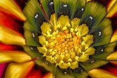 Flor pintada de la margarita Imagenes de archivo
