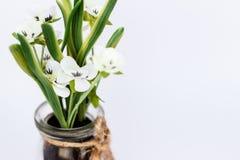 Flor plástica blanca aislada en el primer de cristal del tarro Imagen de archivo