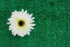 Flor plástica blanca en bakcground plástico verde de la hierba Fotos de archivo libres de regalías