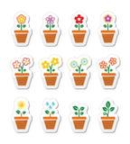 Flor, planta en los iconos del pote fijados Fotografía de archivo