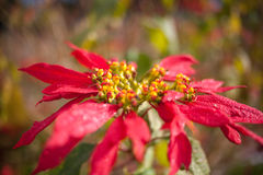 Flor Plantas y animales en Tenerife Fotografía de archivo libre de regalías