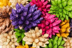 Flor pontudo seca colorida da bola do close up isolada no backgr branco Fotos de Stock