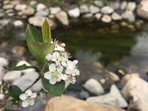 A flor por The Creek Imagens de Stock
