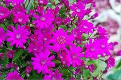 Flor por el camino Imágenes de archivo libres de regalías