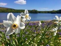 Flor por el lago Fotos de archivo libres de regalías