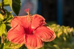 Flor por la mañana muy hermosa Imágenes de archivo libres de regalías