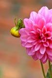 Flor por nascer fotografia de stock
